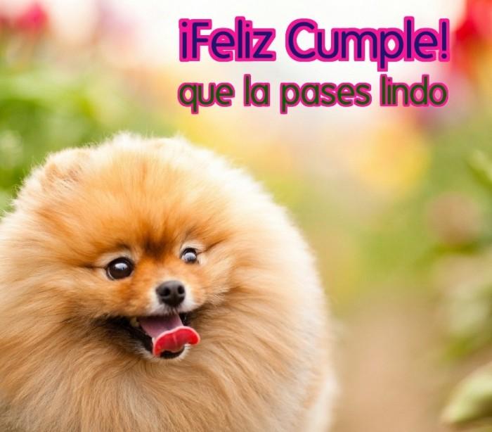 Felix cumpleaños perro