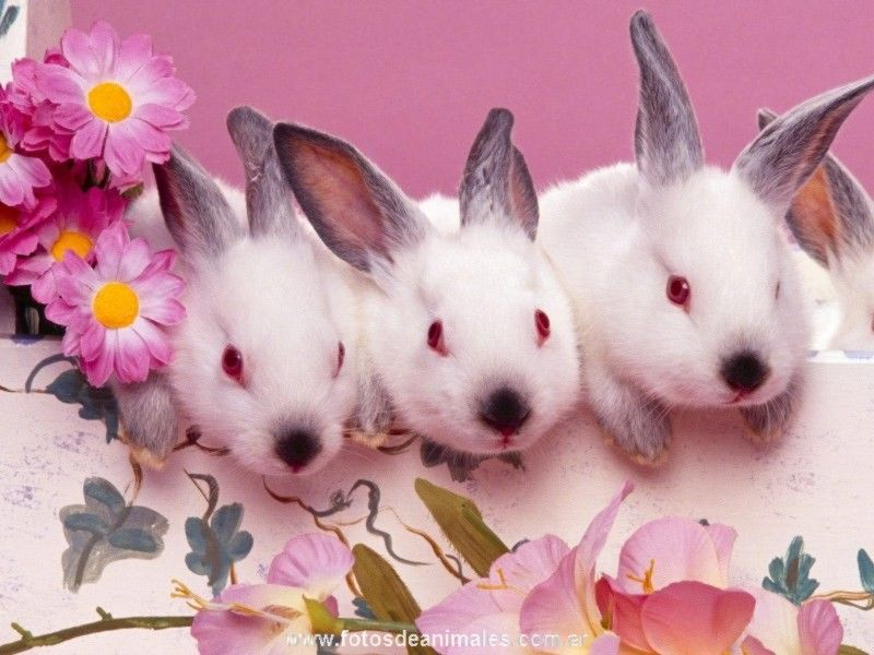 Fotos de animales conejos