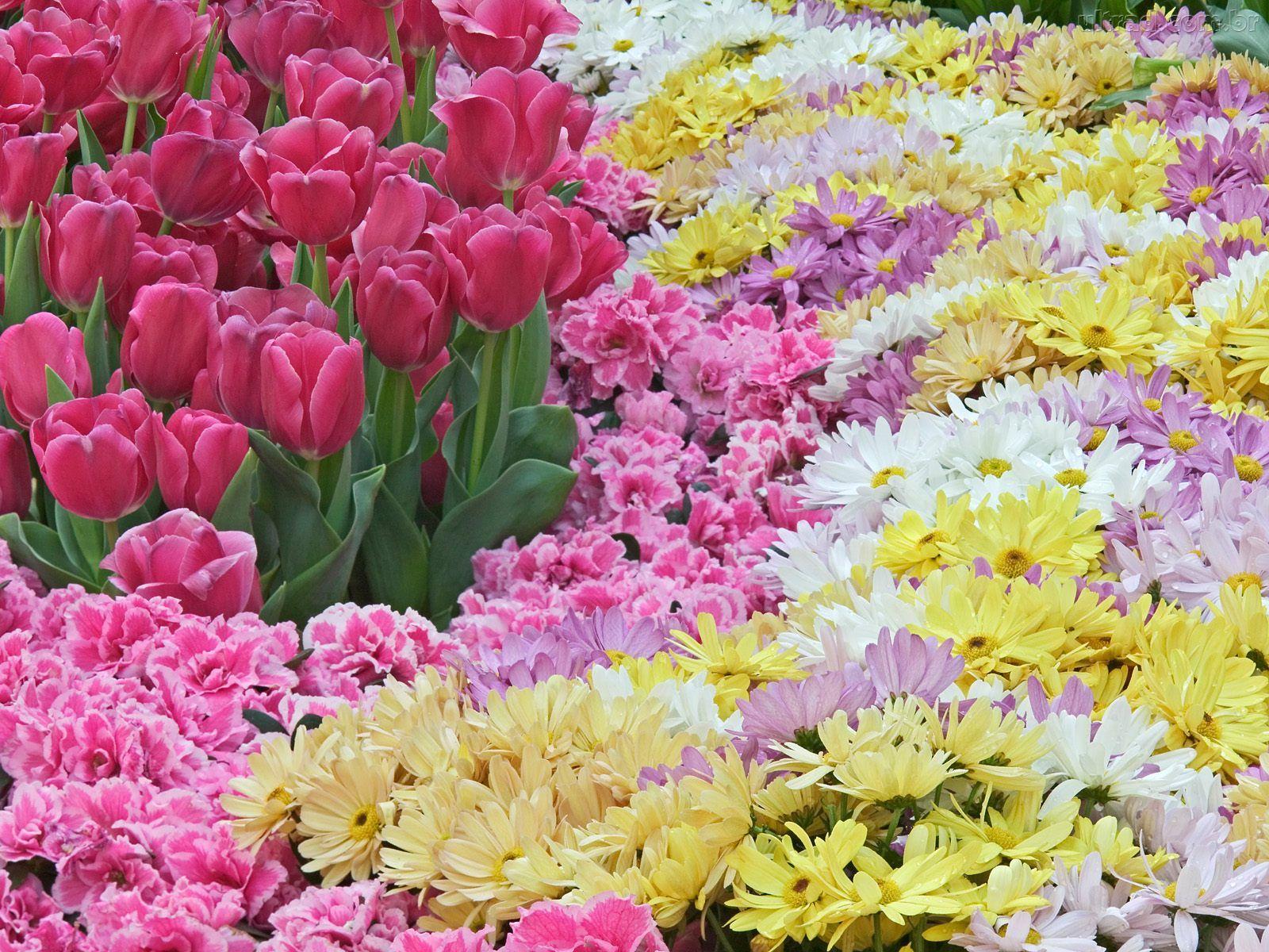Fotos de flores diversas