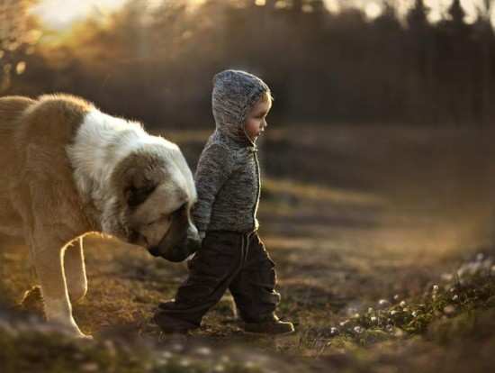 Imagenes bellas perro