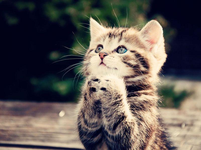 Imagenes de gatitos rezando