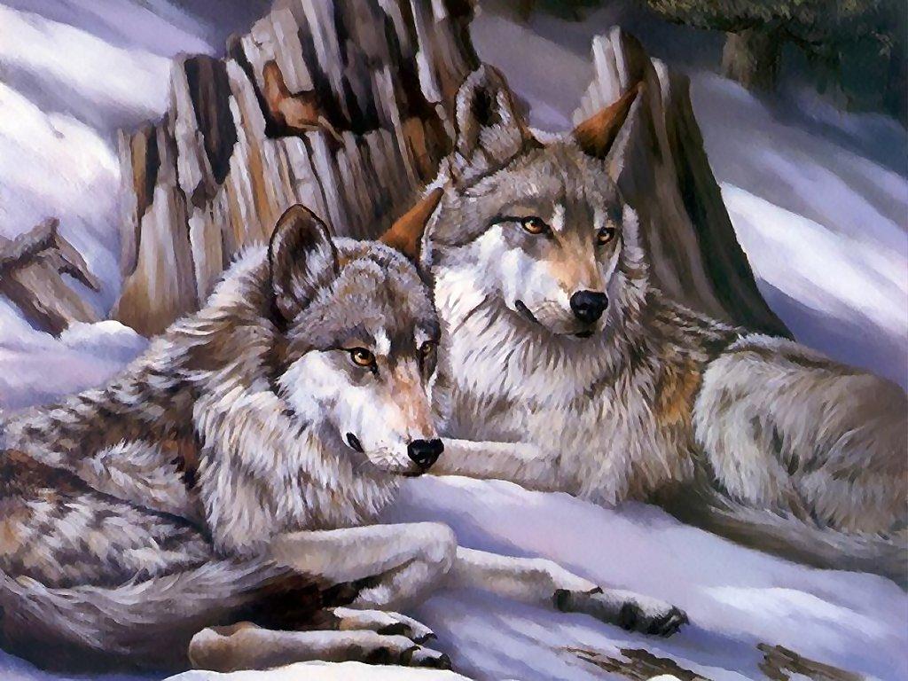 Imagenes de lobos dibujos