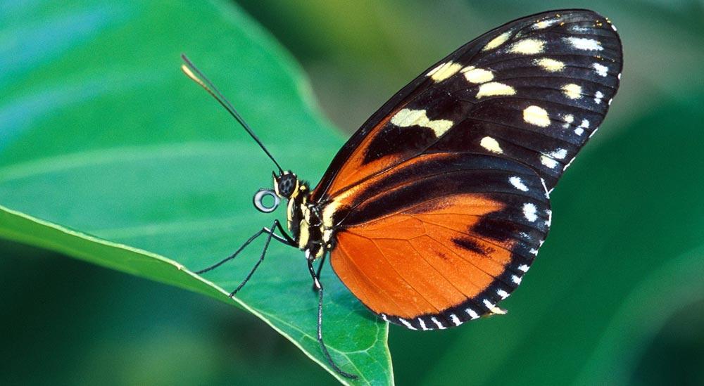 Imagenes de mariposas HD