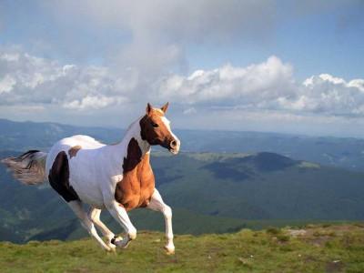 Imagenes de paisajes caballo