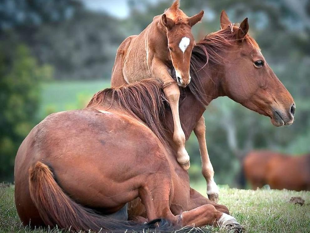 Imagenes hermosas animales