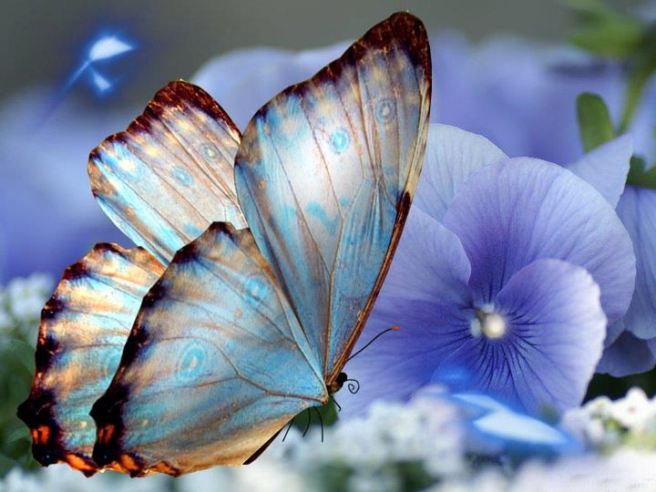 Imagenes hermosas