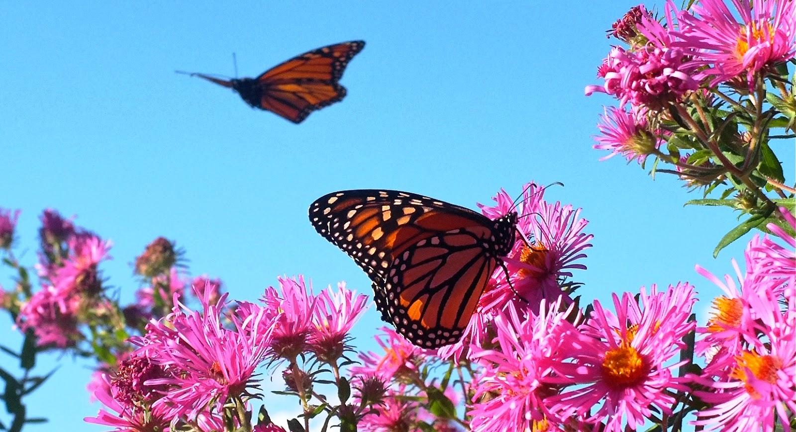 Imagenes mariposas