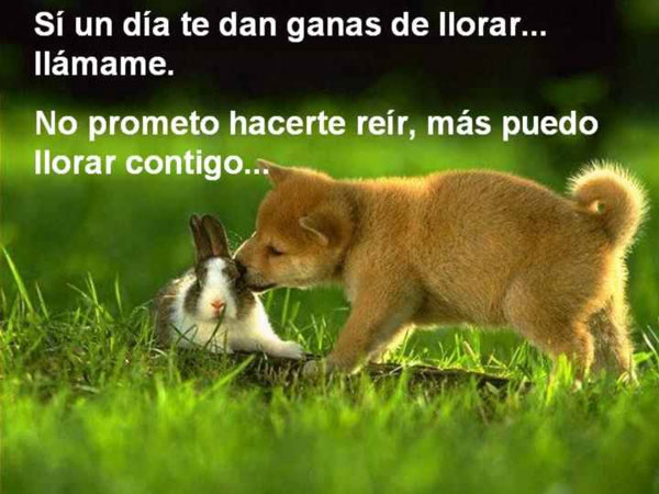 Mensajes de amistad animales